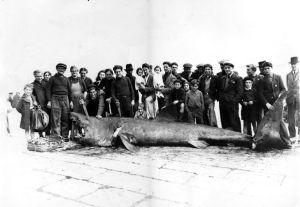 Requin 1 Calvi 46