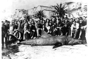 Requin Calvi r2