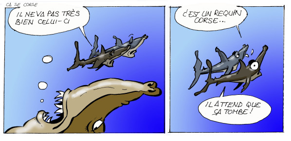 Requin-Corse-macagna