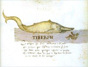 drk.tiberon