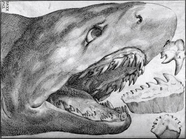 Requin_lamiae 1670 La vana speculazione disingannata dal senso de Agostino Scilla